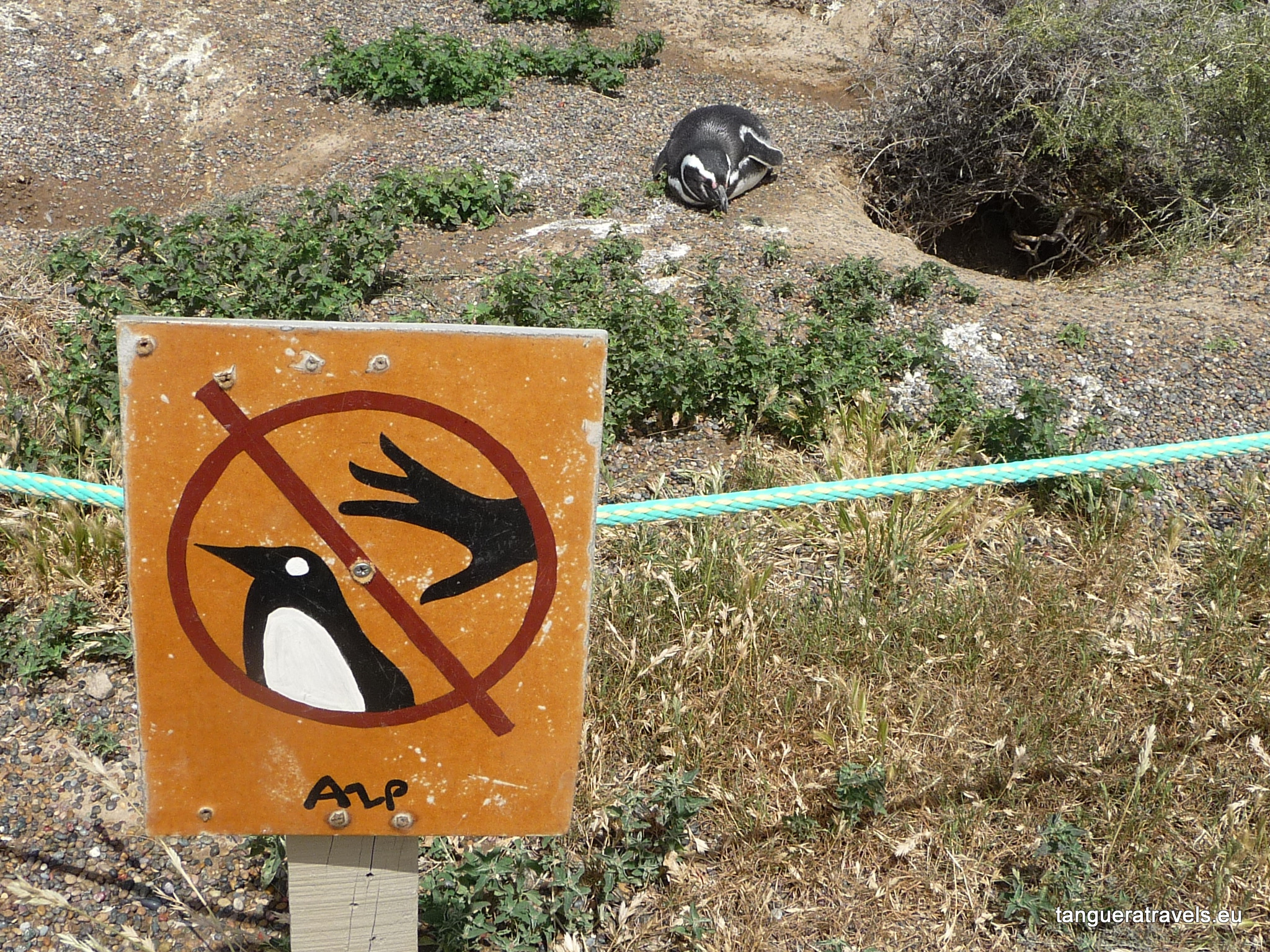 hands off the penguins