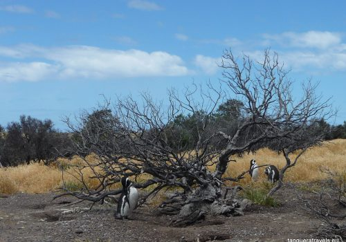 penguins and a petrified tree