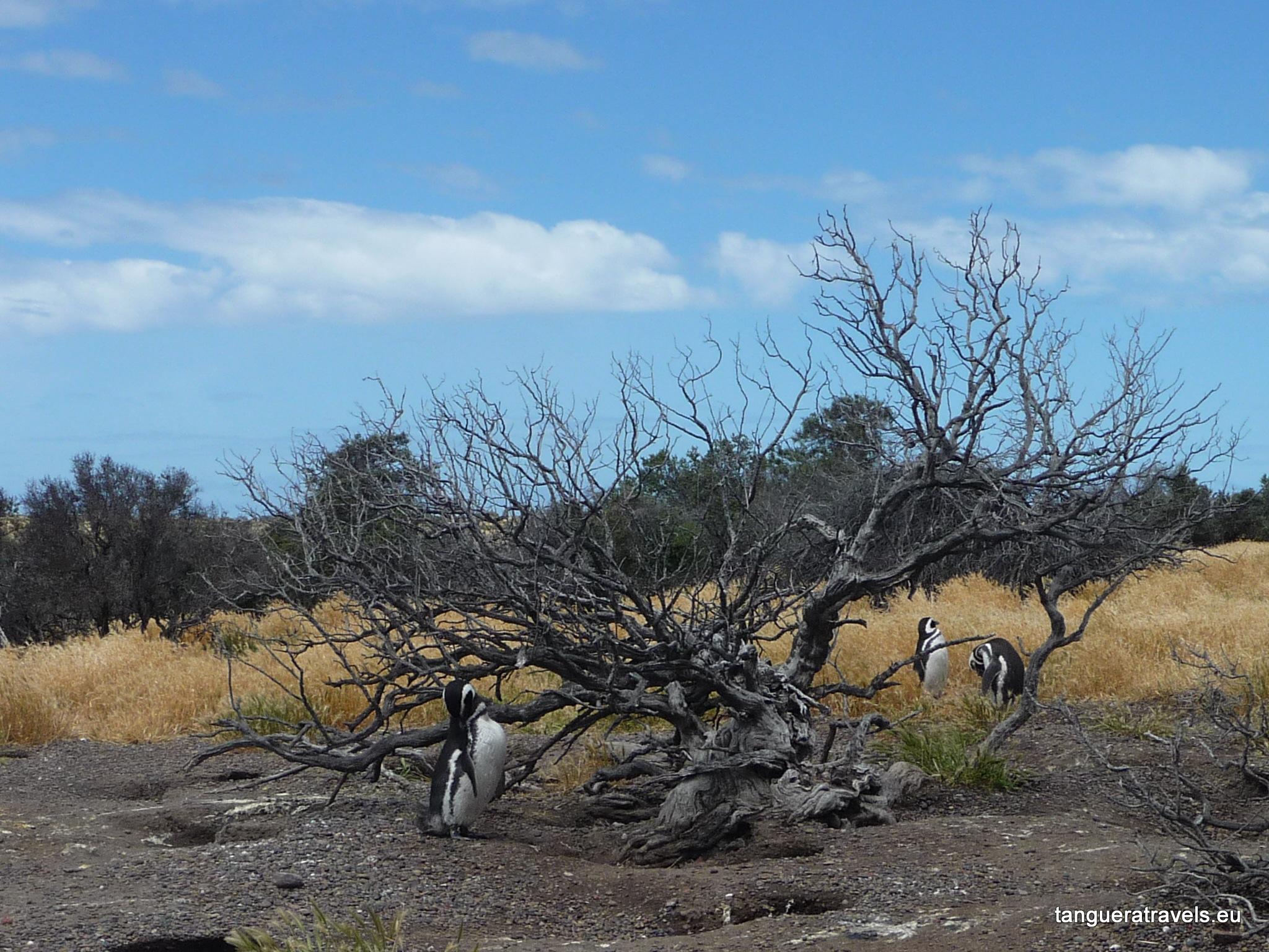 penguins and a petrified tree