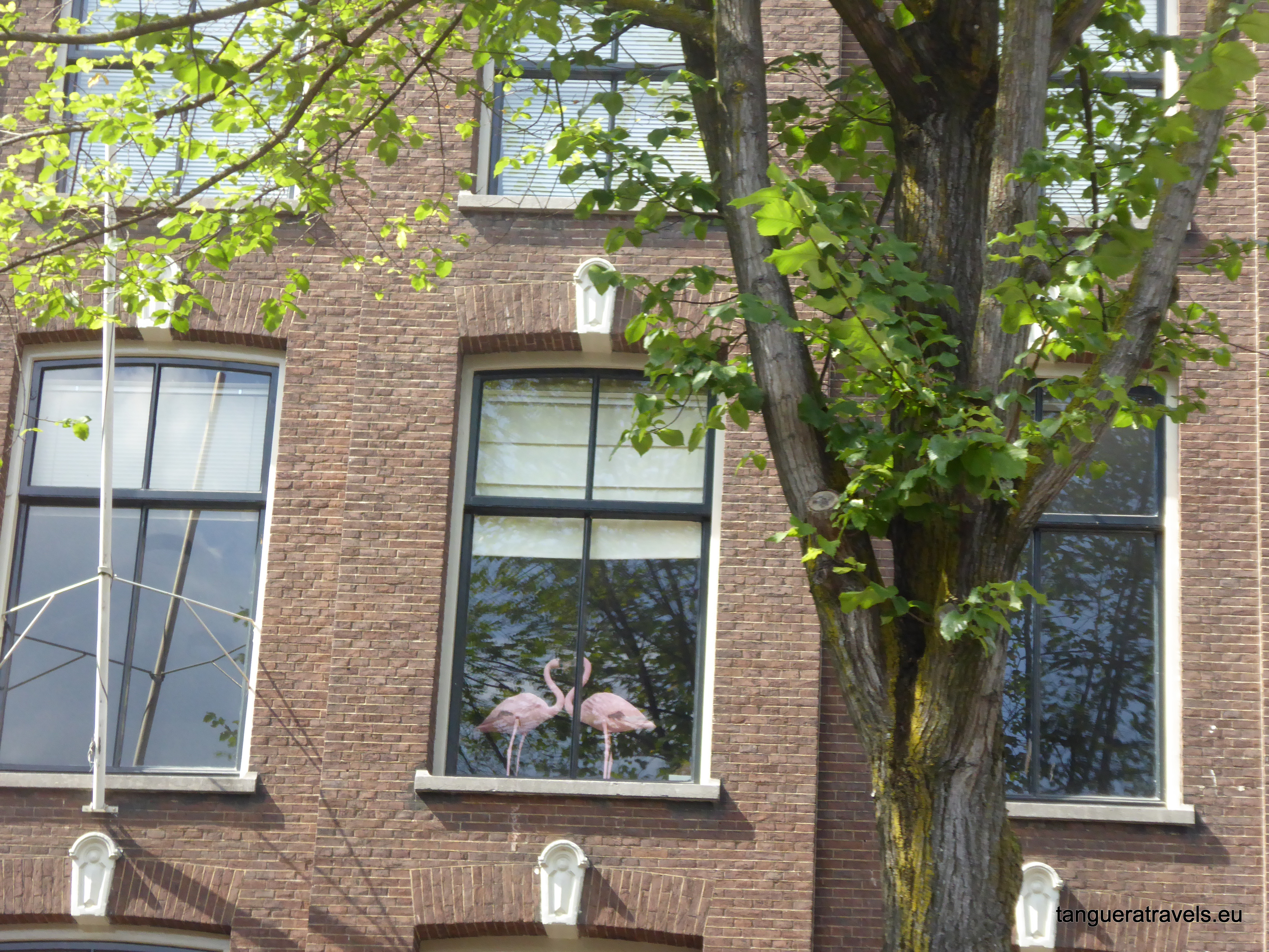 Flamingos at a window in Amsterdam