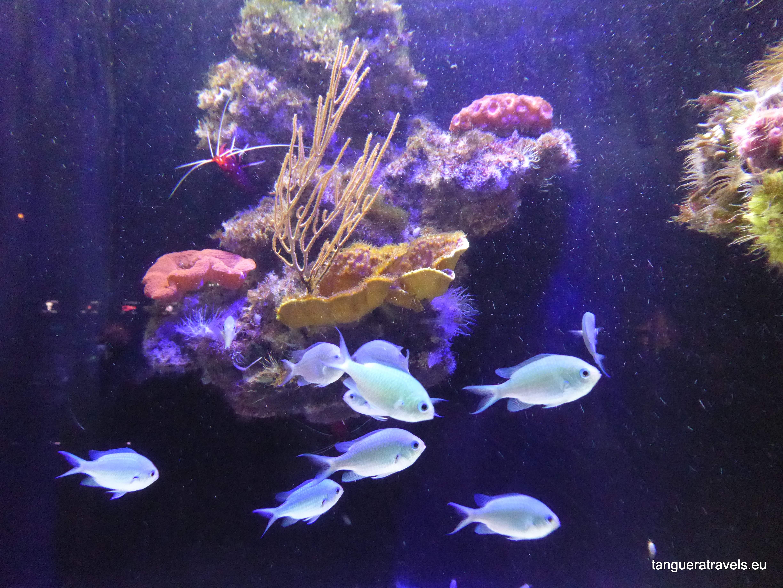 Museum of Oceanography, Monaco