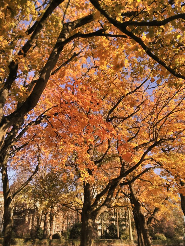 autumn foliage something is better than nothing nanowrimo writing inspiration